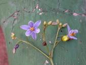 復旦三月花朵:DSC03138.JPG
