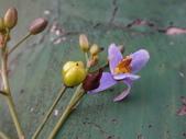 復旦三月花朵:DSC03140.JPG