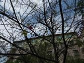復旦三月花朵:IMG_9543.JPG
