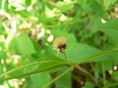 菊科植物:P2160269