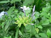 草本類植物:P2110041