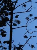 大雪山植物花草:IMG_8687.JPG