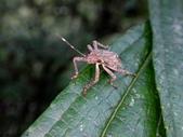 大雪山昆蟲與蜘蛛:DSC07831.JPG