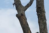 鞘翅目 金龜子:DSC00210