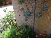 復旦社區園藝花種:DSC03199.JPG