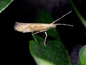 復旦-新天母公園的昆蟲2017/10:DSC08726.JPG