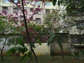 復旦三月花朵:IMG_9545.JPG