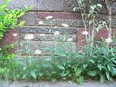 菊科植物:P2110340
