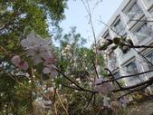 復旦三月花朵:DSC02728.JPG