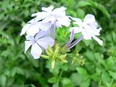 草本類植物:P2110040