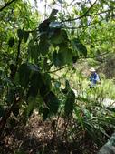 雙溪-老農夫生態農莊及虎豹潭的植物:DSC03542.JPG