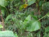 雙溪丁蘭谷生態園區的蜘蛛:DSC03896.JPG