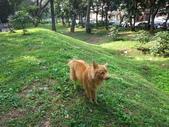 愛犬再次失蹤一天一夜:DSC00037.JPG