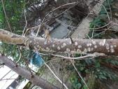 野菇蕈-復旦109~110年:DSC05445.JPG