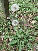 菊科植物:P1940902