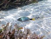 馬爾地夫-印度洋的淺海生物:P7120446a.jpg