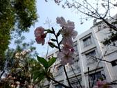 復旦三月花朵:DSC02724.JPG