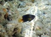 馬爾地夫-印度洋的淺海生物:P7120401a.jpg