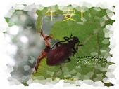 昆蟲問安卡-午安:午安!大擬金花蟲.jpg