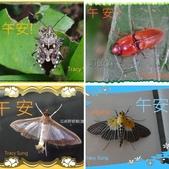 昆蟲問安卡-午安:相簿封面