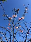 文化公園(原復旦公園)賞櫻花與小紅果:S__28041224.jpg