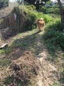 107狗年春節年初二逛大埤塘與菜園:IMG_8213.JPG