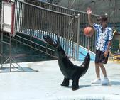 哺乳綱 (貂科、熊科、蝙蝠、松鼠、袋鼠、海豚、鯨魚、海獅):海獅鼻頂細桿頂球