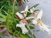 蘭花專輯:P2460355