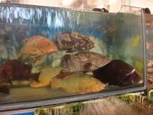 龜吼漁港-珍如意餐廳:DSC08653.JPG