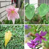 草本類植物:相簿封面