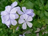 草本類植物:P2110039