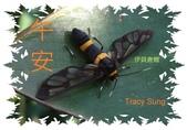 昆蟲問安卡-午安:午安!伊貝鹿蛾-雄.jpg