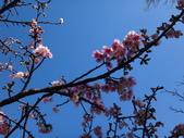 文化公園(原復旦公園)賞櫻花與小紅果:DSC01786.JPG
