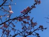 文化公園(原復旦公園)賞櫻花與小紅果:DSC01787.JPG