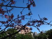 文化公園(原復旦公園)賞櫻花與小紅果:DSC01789.JPG