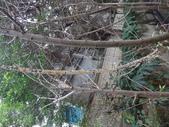 野菇蕈-復旦109~110年:DSC05453.JPG