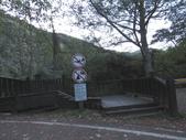 東勢大雪山半日賞鳥:IMG_8650.JPG