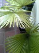 老友台北家盆栽植物:13808.jpg