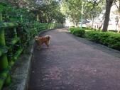 愛犬再次失蹤一天一夜:DSC09553失蹤處.JPG