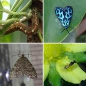 108~109年復旦社區昆蟲:相簿封面
