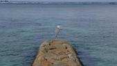 馬爾地夫-瑞僖敦渡假村的生物:L1020159蒼鷺.JPG