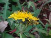 復旦三月花朵:DSC02586.JPG