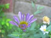 菊科植物:P2110354