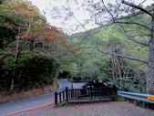東勢大雪山半日賞鳥:IMG_8624.JPG