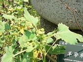 菊科植物:P2140789