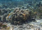 馬爾地夫-印度洋的淺海生物:P7120428a.jpg
