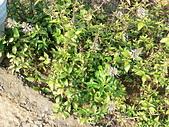 草本類植物:P2270487