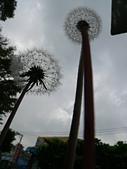菊科植物:P1940924