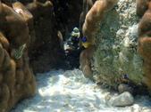 馬爾地夫-印度洋的淺海生物:P7120457a.jpg