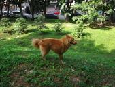 愛犬再次失蹤一天一夜:DSC00031.JPG